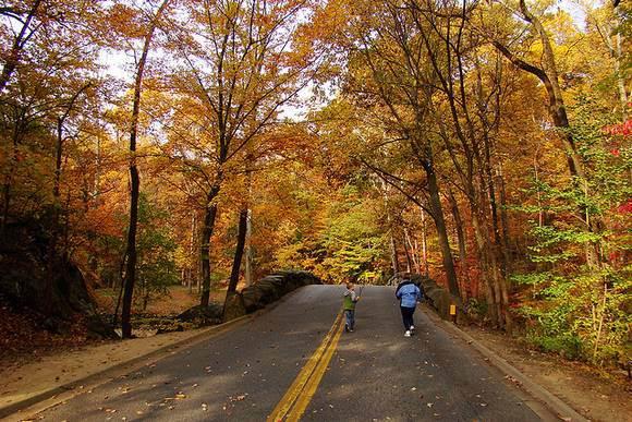 autumn-walking
