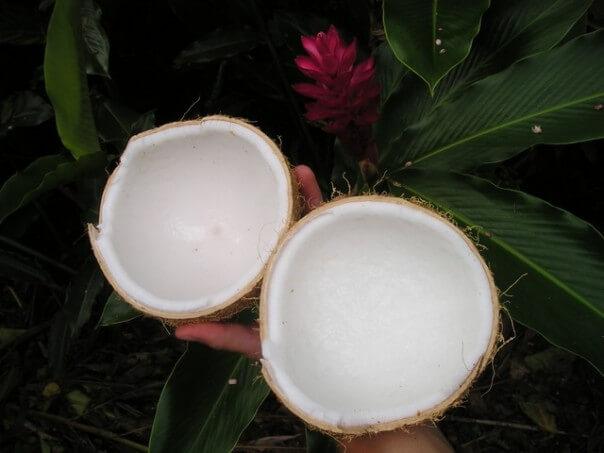 coconut-43_640