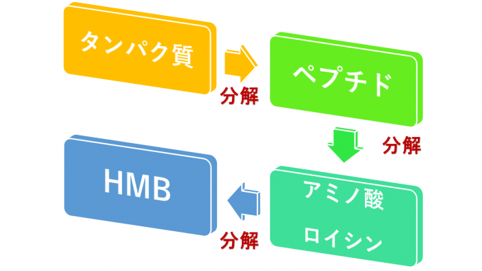 HMB 使用