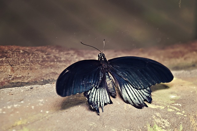 butterfly-1136923_640