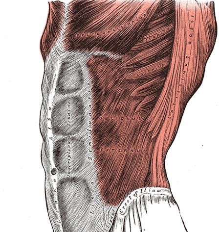 腹筋の基本的な役割と知っておくべき基礎知識