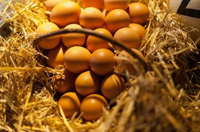 えっ!?まだ卵食べていないの?筋肉にオススメ!卵を食べるべき理由