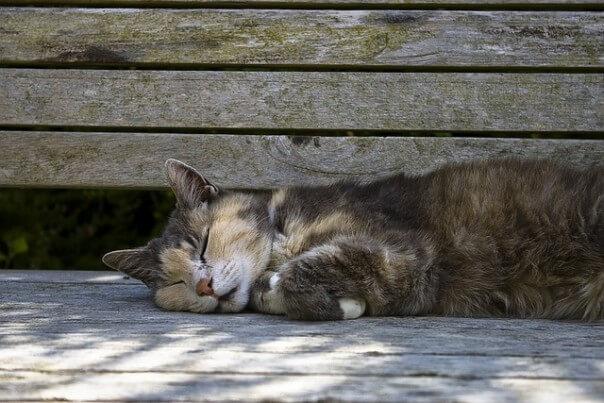 cat-395553_640