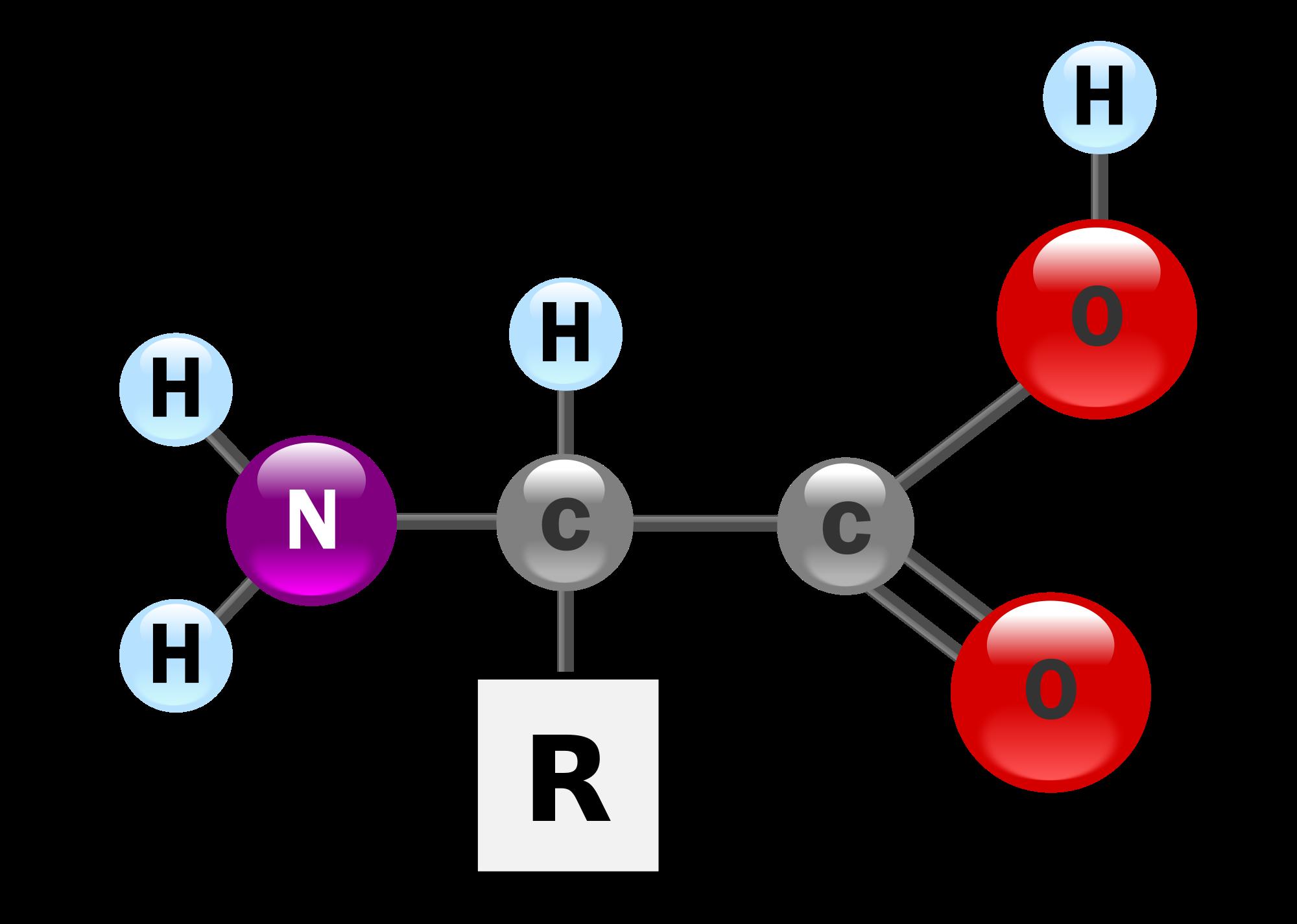 身体を作るアミノ酸まとめ。効果的なアミノ酸の摂取方法と効用